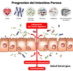 Progresión Intestino Poroso